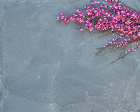 Purple spring blooming tree branch on a grey concrete stone background, top view, copy space. Stock Images