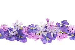 Purple spring flower border Royalty Free Stock Images
