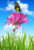Purple spring flower. With butterfly and ladybug Royalty Free Stock Photography
