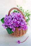 Purple spring flowers. In a basket Stock Photos
