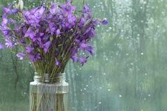 Purple spring flowers. Near wet window Stock Images