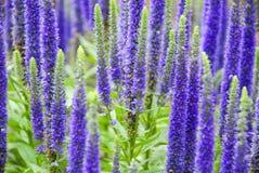 Purple Spring Flowers Royalty Free Stock Photos