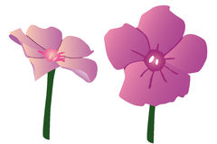 Purple spring flowers on white background. Vector pink spring flowers royalty free illustration