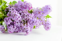 Purple spring lilac flowers blooming. On white Stock Photos