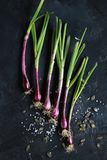 Purple spring onions on dark table background. Top view Stock Photography