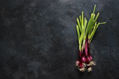Purple spring onions on dark table background. Top view Stock Photo