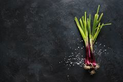 Purple spring onions on dark table background. Top view Stock Image