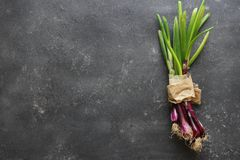 Purple spring onions on dark table background. Top view Royalty Free Stock Images