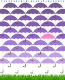 Purple Spring Umbrellas Rain Grass Stock Photos
