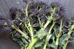 Purple Sprouting Broccoli Royalty Free Stock Photo