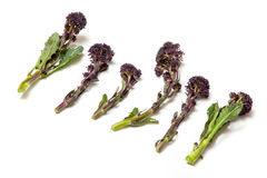 Purple sprouting broccoli Stock Images