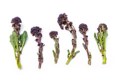 Purple sprouting broccoli Royalty Free Stock Image