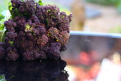Purple sprouting broccoli outdoors Royalty Free Stock Photo