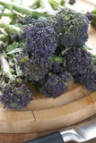 Purple sprouting broccoli. A vegetable high in nutrients Royalty Free Stock Photography