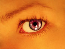 Purple Stare. Purple colored eye staring directly into camera. Warm tones, focus on eye royalty free stock image