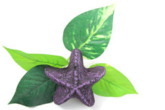Purple starfish and leaf Stock Photography