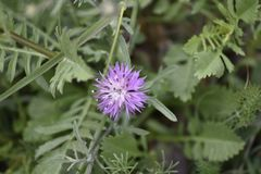 Purple starry flower stock photos