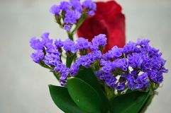 Purple Statice with red rose royalty free stock images