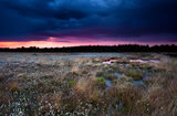 Purple stormy sunset over swamp Stock Photos