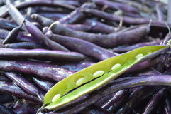 Purple string beans. A pile of purple string beans with one pod split revealing the beans inside Stock Image
