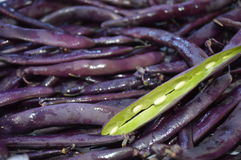 Purple string beans. A pile of purple string beans with one pod split revealing the beans inside Stock Images
