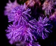 Purple summer flower Stock Images