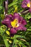Purple summer flower stock photos