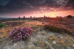 Purple summer sunrise on heathland Royalty Free Stock Photography