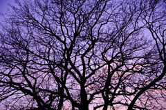 Purple sunset. Royalty Free Stock Photos