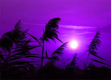 Purple sunset. Sunset with color changed to purple stock photos