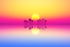 Purple sunset Royalty Free Stock Images