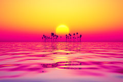 Purple sunset Royalty Free Stock Photo