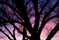 Purple sunset over trees Stock Photography