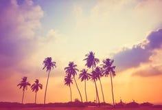 Purple sunset. The sun walks along the beach with a beautiful purple sunset Royalty Free Stock Photo