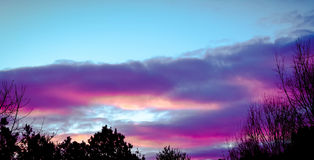 Purple sunset. In the winter with dark trees in the foreground.rn Royalty Free Stock Image