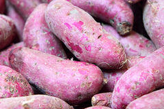 Purple Sweet Potato. Closeup shot of Purple Sweet Potato Royalty Free Stock Photo