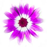 Purple target on white stock photos