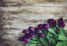 Purple Terry tulips on wooden background, place for your text. Purple Terry tulips on old wooden background, the place for your text Stock Photo