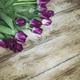 Purple Terry tulips on wooden background, place for your text. Purple Terry tulips on old wooden background, the place for your text Royalty Free Stock Photos