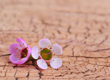 Purple Tiny Flowers on Wooden Background Stock Image