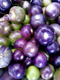 Purple Tomatillo. A grouping of mostly hulled purple tomatillos at various degrees of ripeness Stock Photo