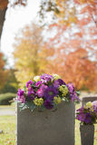 Purple Tombstone Flowers in the Fall Stock Image