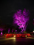 Purple tree at night scene Stock Photos
