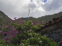 Purple tropical flowers with old stone house and green hills whi Stock Photography