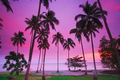 Purple tropical sunset. Spectacular blue, red, and purple sunset at a tropical resort vacation paradise beside a calm sea Royalty Free Stock Image
