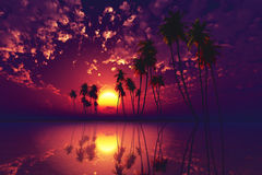 Purple tropical sunset Stock Image