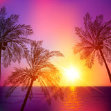 Purple tropical sunset with palms silhouettes Stock Photo