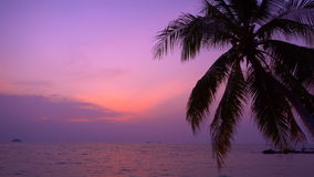 Purple tropical sunset with sea view and palm tree. In Thailand stock footage