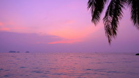 Purple tropical sunset with sea view and palm tree. In Thailand stock video footage