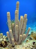 Purple tube sponges Royalty Free Stock Images